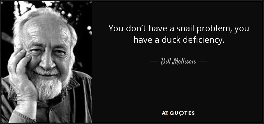 You don't have a snail problem, you have a duck deficiency. - Bill Mollison