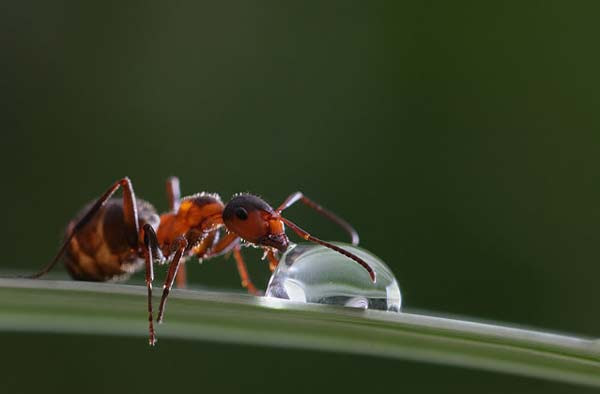 perierga.gr - Σαλιγκάρια και έντομα ποζάρουν στη βροχή!