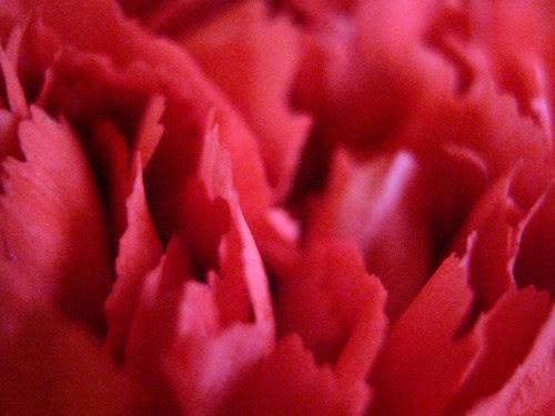 flowers 5b