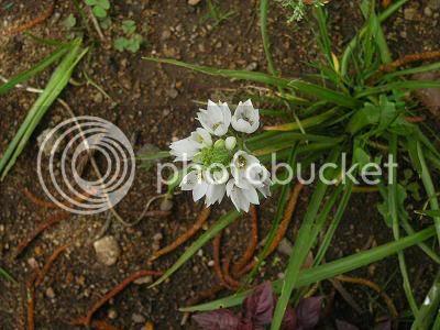 White Flowers -  Photobucket.com