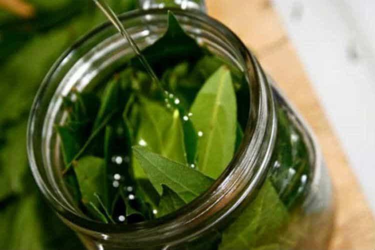 olio d'oliva e alloro