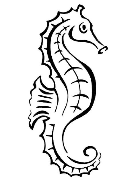 seahorse coloring pages   print seahorse