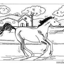 Work horses coloring pages - Hellokids.com
