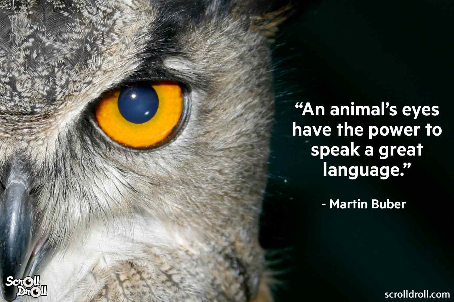 Quotes on Animals by famous people 2 x