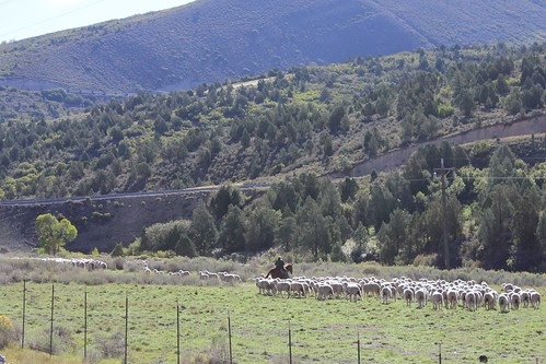 IMG_2338_Sheep_Herder_Between_Provo_&_Moab