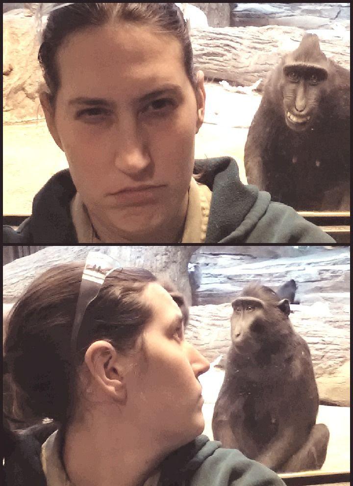 girl mock monkey, monkey imitating girl, woman imitating monkey, primates at zoo, zoo funnies, zoo comedy, zoo humor, monkey humor, ape humor