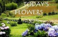todays-flowers-logo1