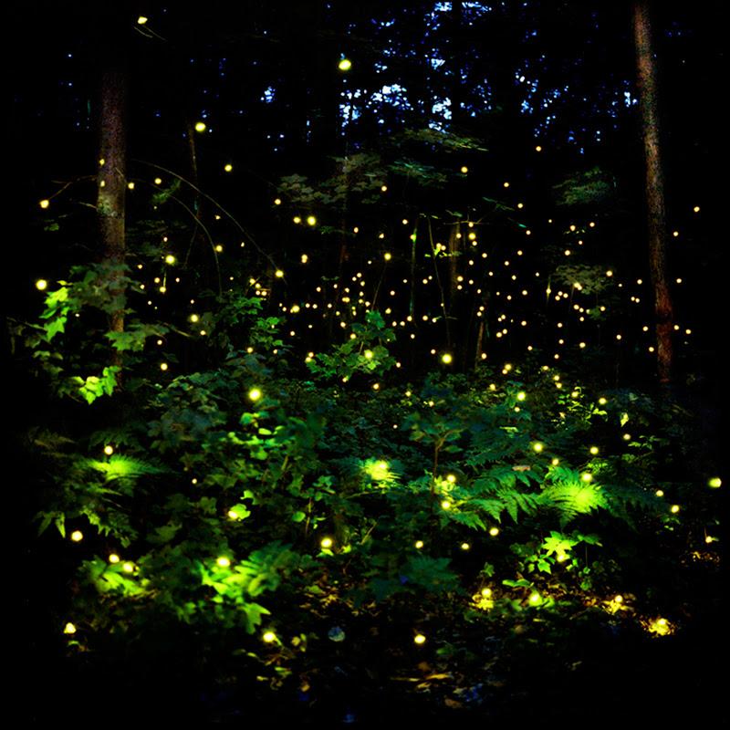 Landscape Light Installations by Barry Underwood light landscapes installation