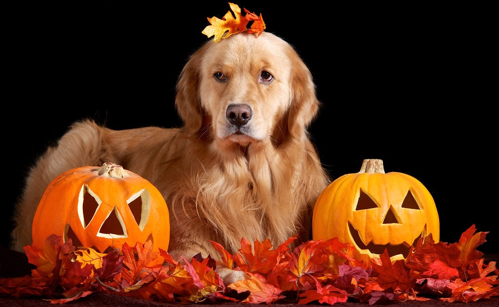Can You Give A Dog Pumpkin Daily