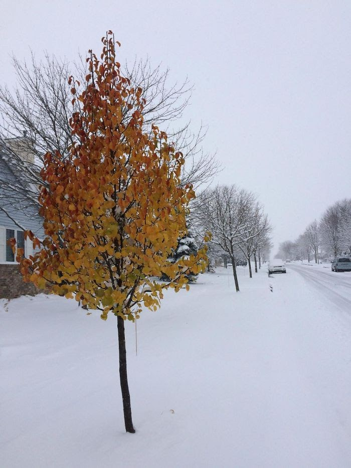 One Tree On                                                      My Street Refused                                                      To Accept Winter