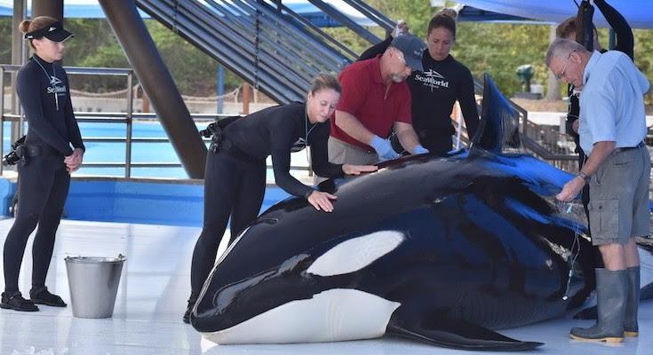 Τρίτη νεκρή φάλαινα στο Sea World μέσα σε έξι μήνες