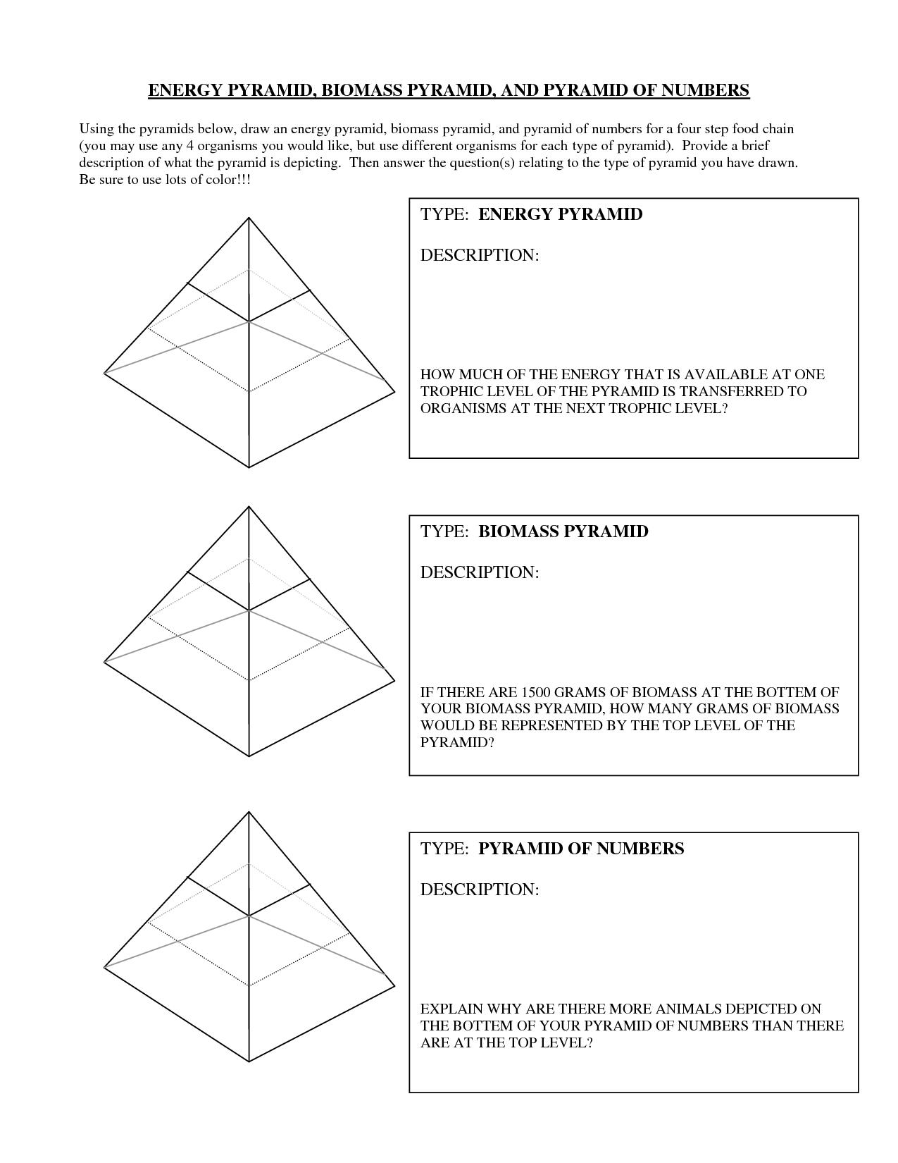 31 Ecological Pyramid Worksheet Answer Key - Worksheet ...