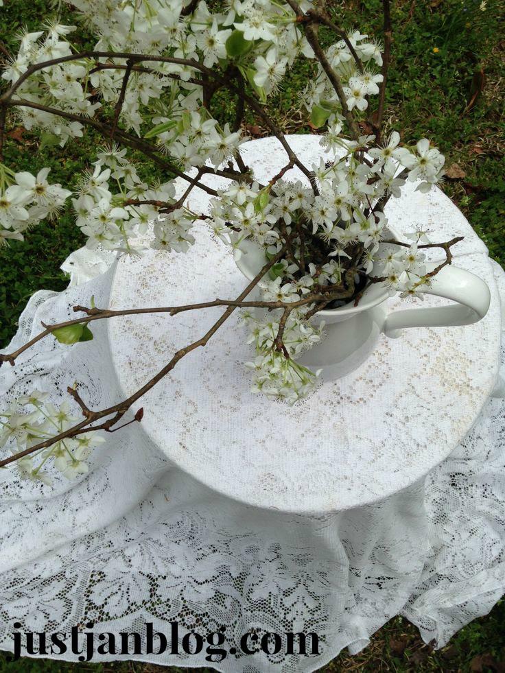 white bradford pear flowers6