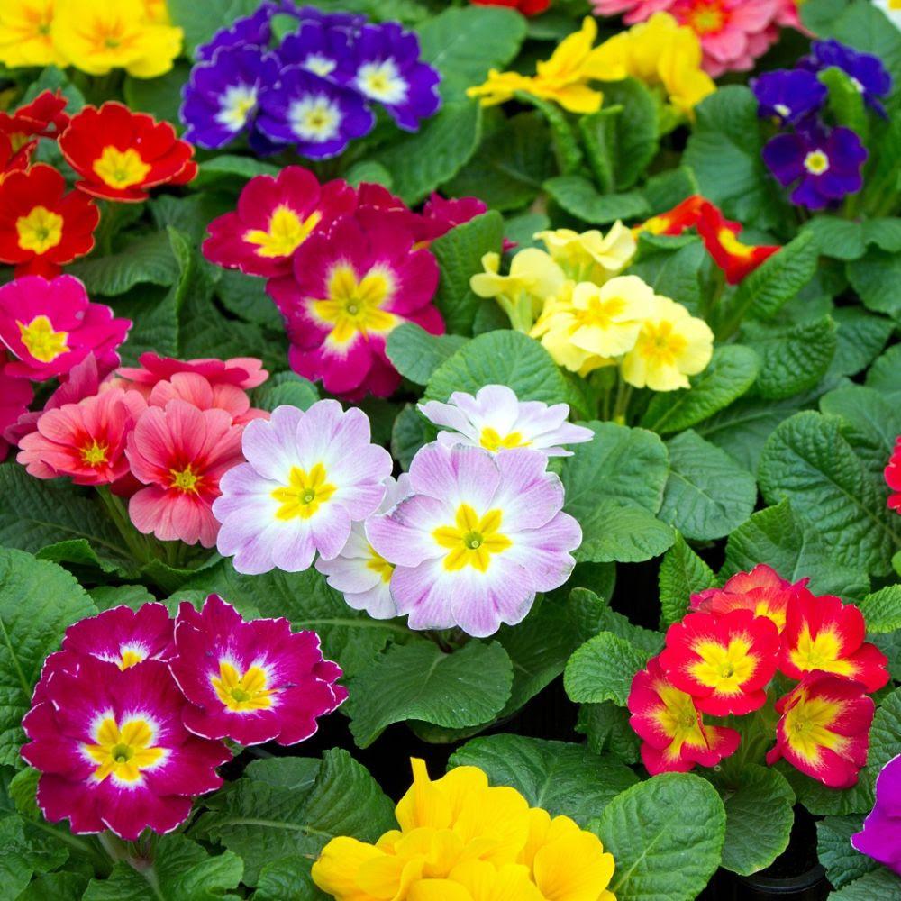 Calendrier Des Ftes Des Plantes Et Jardins De Mai 2020