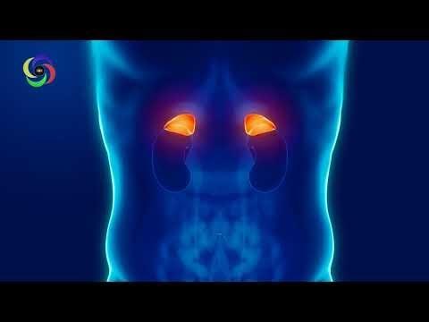 7.83 Hz | Adrenal Healing and Detoxification | Adrenals Healing | Normalize Adrenal Function