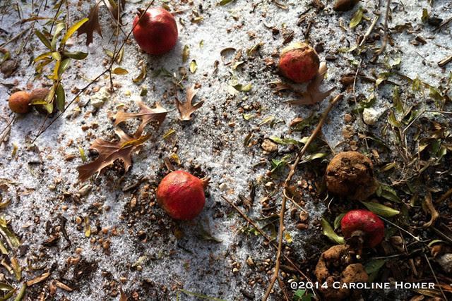 snow poms
