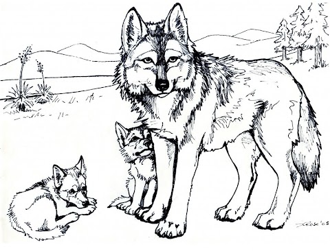 Beautiful Wolf Pictures To Color