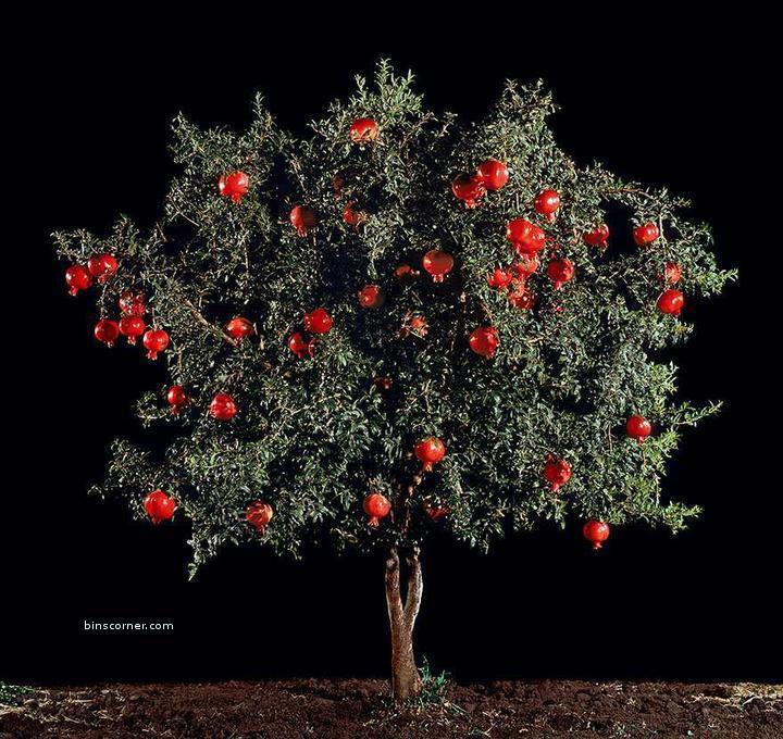 Любимые фрукты!  Как они растут??????7