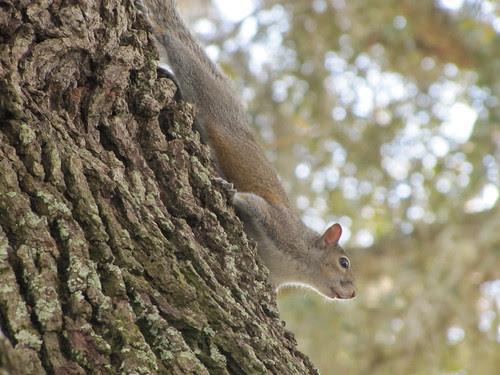 IMG_7273_Squirrel