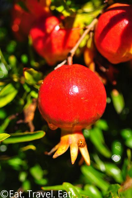Los Angeles County Arboretum and Botanic Garden- Arcadia, CA: Pomegranates