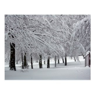 trees and snow postcard