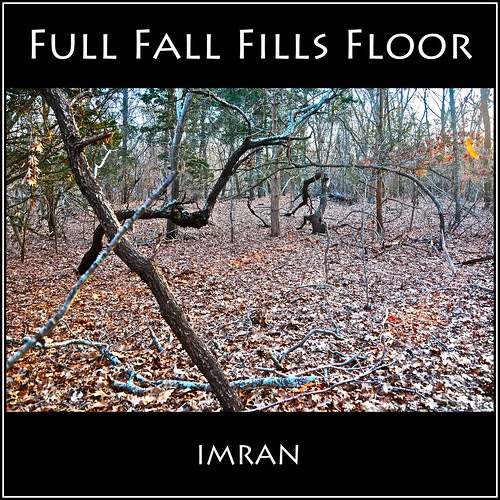 Full Fall Fills Floor Of Forest Under Falling Sun - IMRAN™ by ImranAnwar