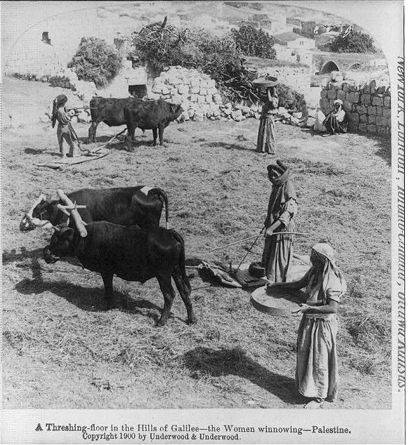 A threshing floor in the hills of Galilee - the women winnowing Palestine