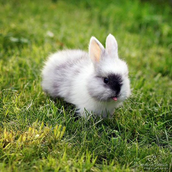cute-bunnies-tongues-21
