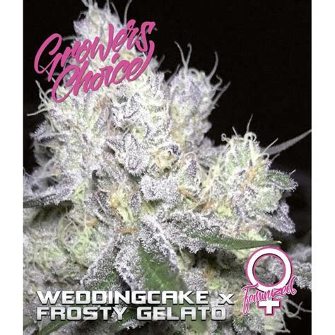 Weddingcake x Frosty Gelato (Growers Choice) :: Cannabis