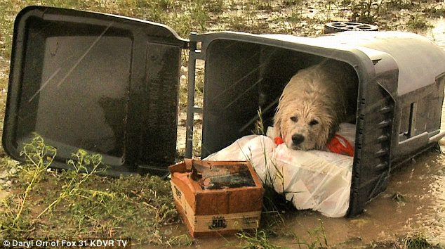 Touching: This picture of a dog forced to seek shelter in a trash can touched hundreds of web users