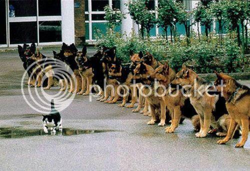 σκυλιά... ποιός νοιάζεται?