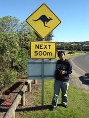 Papan Tanda Kangaroo Crossing, Australia