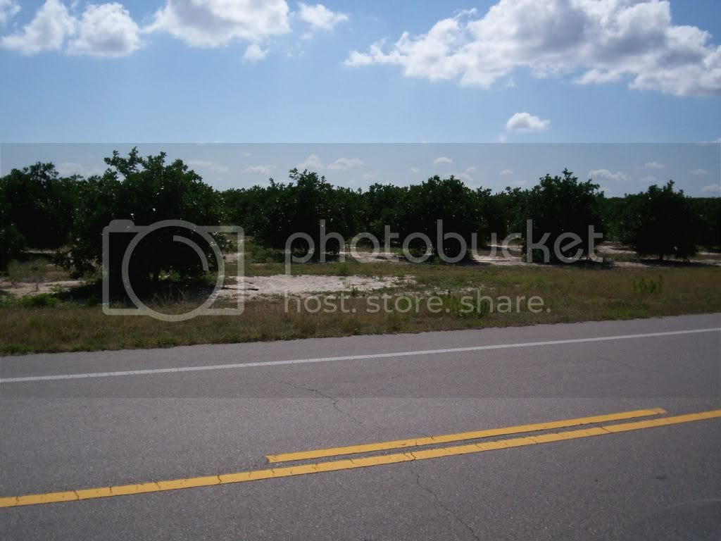 Can't ride through Florida without seeing orange groves Pictures, Images and Photos