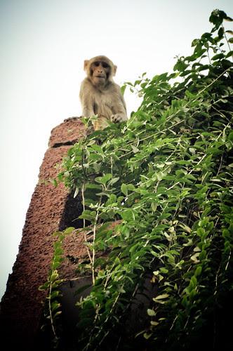 DelhiPartB-12