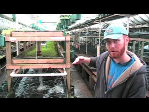 Aquaponic Filtration Systems