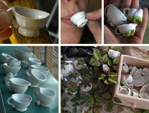 Tea Cup Roses Progress