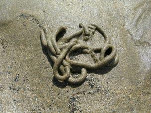cordón de arena de Arenicola