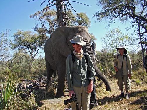 DSC08150 Elephant returned hat