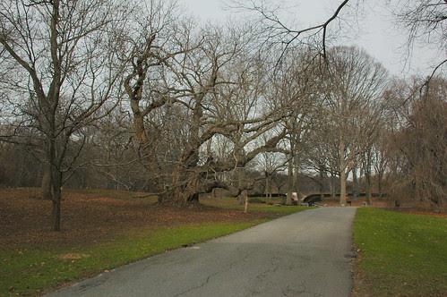 Path to Oak Circle, Brooklyn Botanic Garden