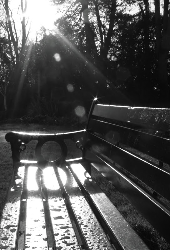 Wet bench in the sun 12/366