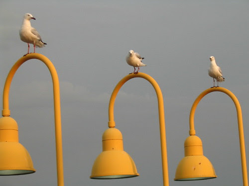 Gulls on lamps