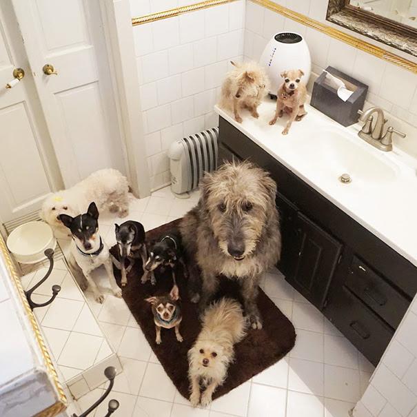 16. «Эти собаки очень мудрые».
