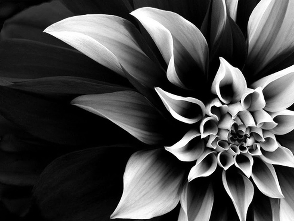 Black And White Flowers Wallpaper 1024x768 846