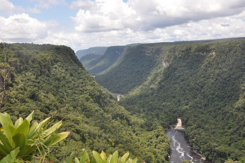 guyana_forests_640