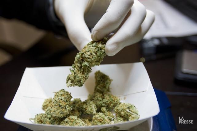 Les dispensaires ou Clubs Compassion distribuent du cannabis... (PHOTO OLIVIER JEAN, LA PRESSE)