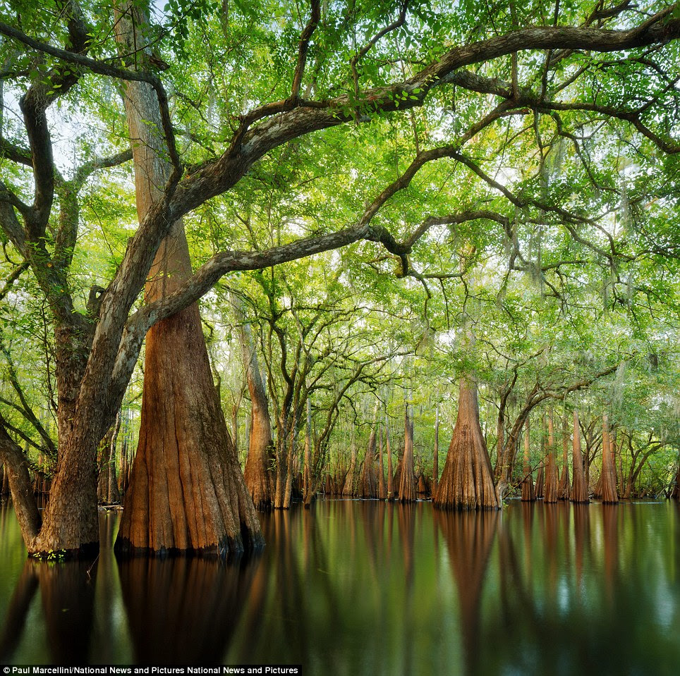 Enchanting: Paul Marcellini captured the wonders of Florida in the Trees, Woods and Forests category with his entry called Cypress Sanctuary