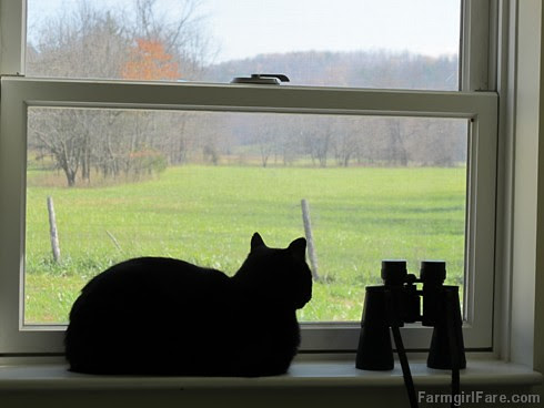 Mr. Midnight on the kitchen windowsill - FarmgirlFare.com
