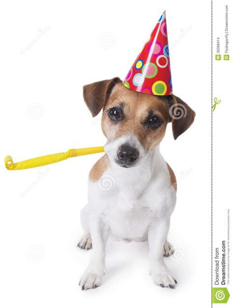 Happy Birthday Dogs And Cats Cute Cat Dog   Litle Pups