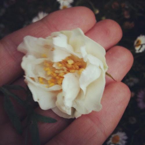 Mock orange flower