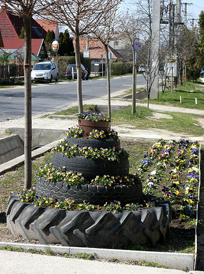Csömör, Hungary, spring with pansy flowers
